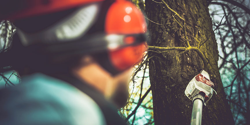 Tree Pruning And Trimming Mistakes You Should Avoid