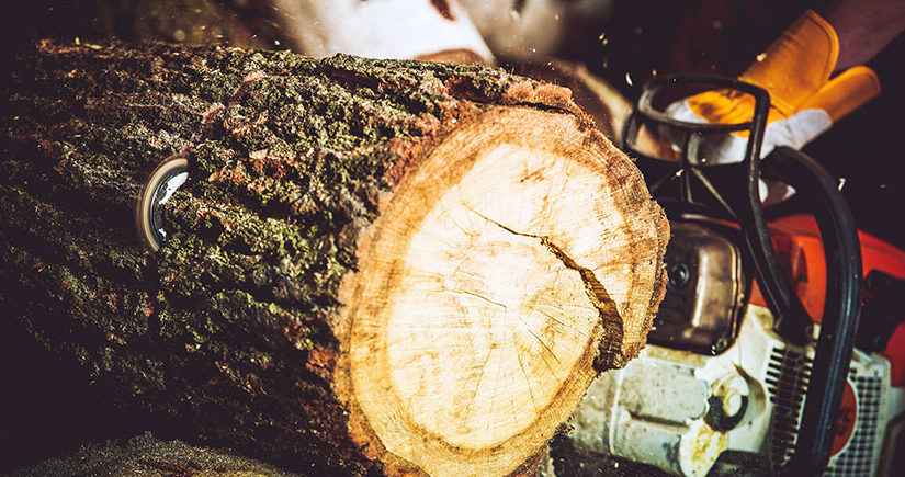 Valuable Tree Pruning And Trimming Tips