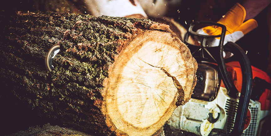 Tree Removal Services: Tips To Consider When Cutting Down Trees